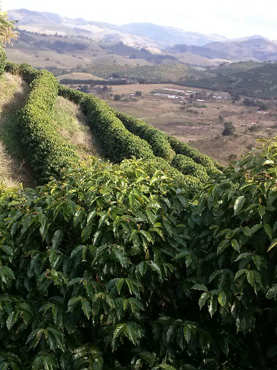 Moinho's farm (3)